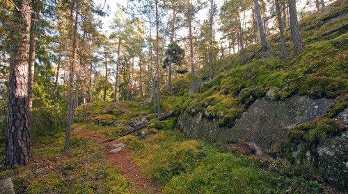 Det stora Nackareservatet domineras av tall- och granskogar, med många sjöar och berghällar som höjer sig över skogen. Området är ett av Stockholms mest älskade friluftsområden och mycket lättillgängligt. Här finns flera badplatser och gott om stigar för promenader eller skidturer. Vintertid plogas skridskobanor. Skogarna är rika på bär och svamp. I sjöarna häckar storlom och kricka och det finns gott om spår av bäver. På vintern jagar strömstare i forsarna.
