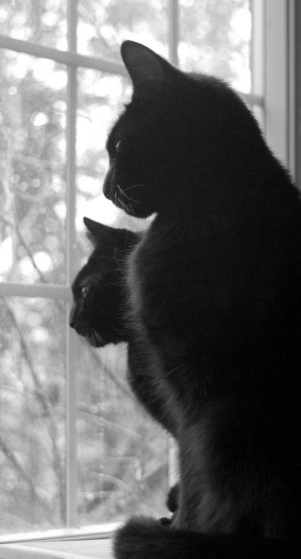 .2 black cats at the window.