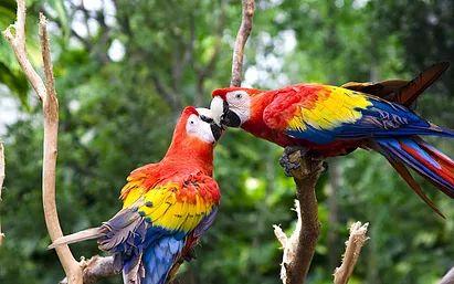 The Budgerigar and Foreign Bird Society (Toronto) #parrot #petbirds #companionparrot #birdclub