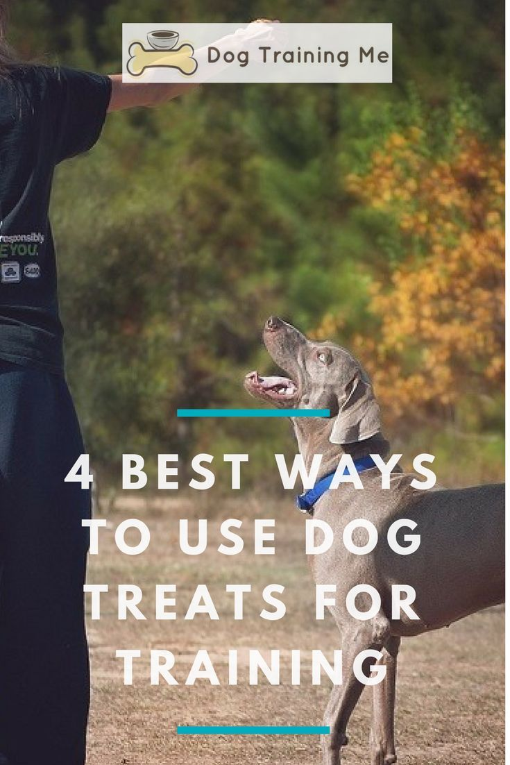 4 Best Ways To Use Dog Treats For Training Best Treats For Dogs