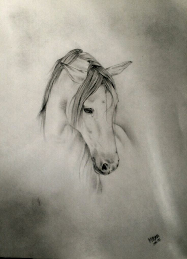 A quick sketch of this pretty picture...Pencil drawing.
