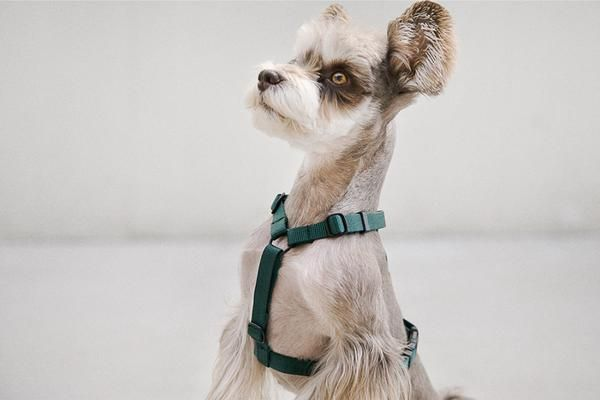 Andblank Harness Green Dog Harness Dogs Dog Body Language