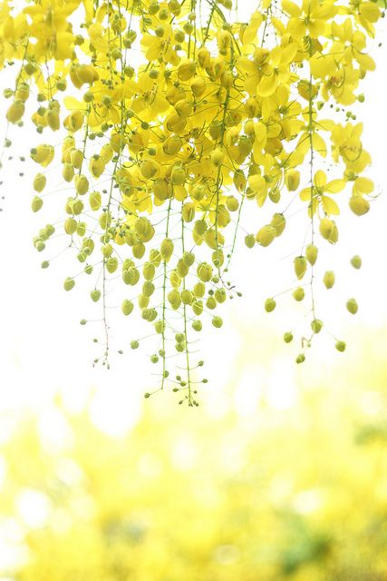 #yellow hanging posies - I'd like these on my back porch, please. They are so happy!