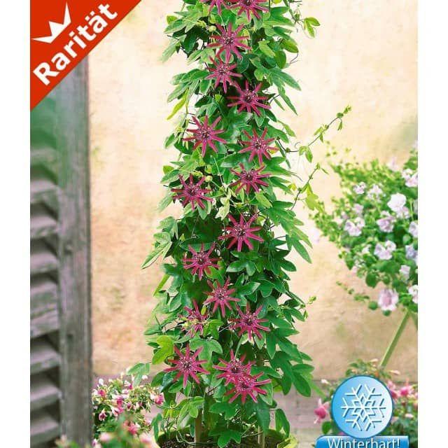 meer dan 1000 idee n over balkon planten op pinterest. Black Bedroom Furniture Sets. Home Design Ideas
