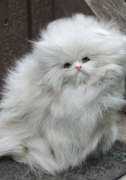 """* * """" Someone brings a pair of Oster clippers and getz some of dis fur offa meez. If me humans don'ts help; I kin getz all matted and dat hurts ! """""""