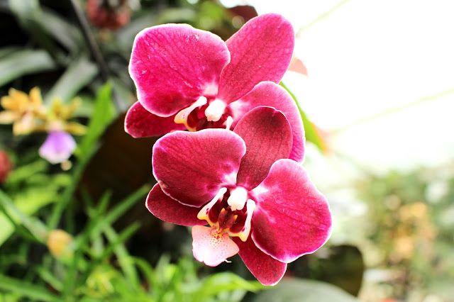 Kew Gardens Orchid Exhibition
