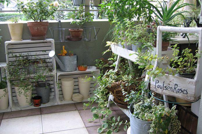 自宅でもきれいな花や野菜を育てよう!ベランダでできるガーデニングや野菜栽培についてまとめてみました。