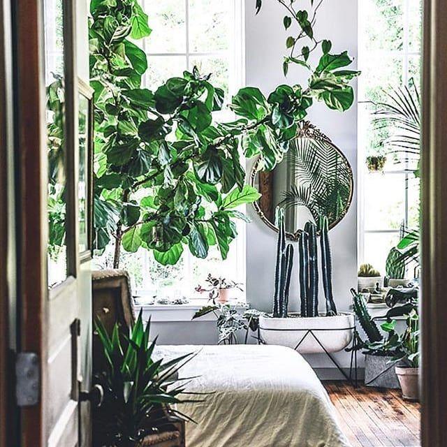 piante in camera da letto? si sei sicura? sì fanno male? no ...