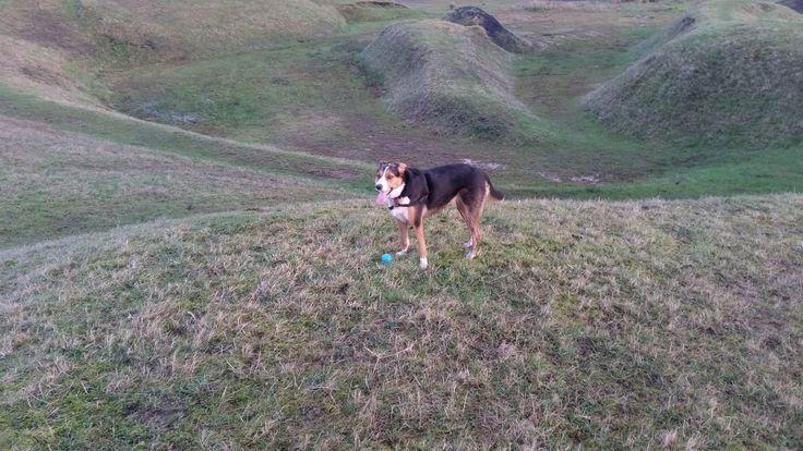 Millie loves running over the Horse land sculpture. Penallta park.
