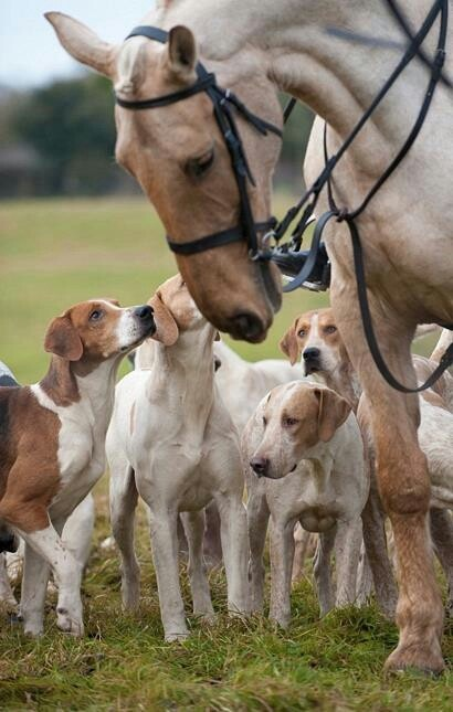 Horse & hounds = English country life