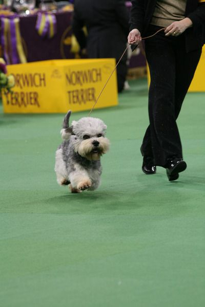 InfoDog - The Dog Fancier's Complete Resource for information about AKC Dog Show Events, and Dog Products and Services - WABR Dog