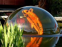 Oh my gosh! All the more reason to have a pond again....Koi Pearl, it is a piece of glass that lifts water up so the fish can swim into it