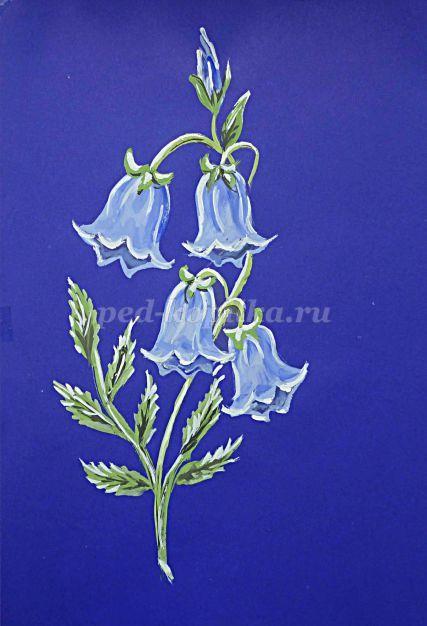 Как нарисовать цветы колокольчики поэтапно