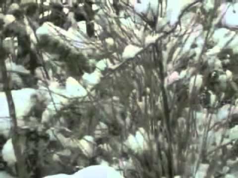 Sadahzinia - Πετρανάσα