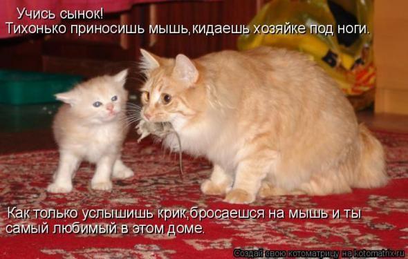Очередная порция юмора и смеха / Болталка / Юмор