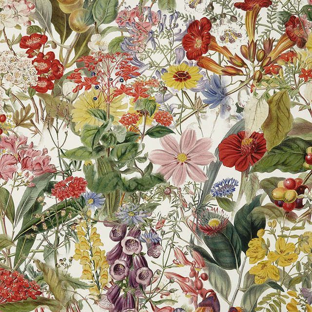 BuyJohn Lewis Chelsea Floral Furnishing Fabric, Multi Online at johnlewis.com