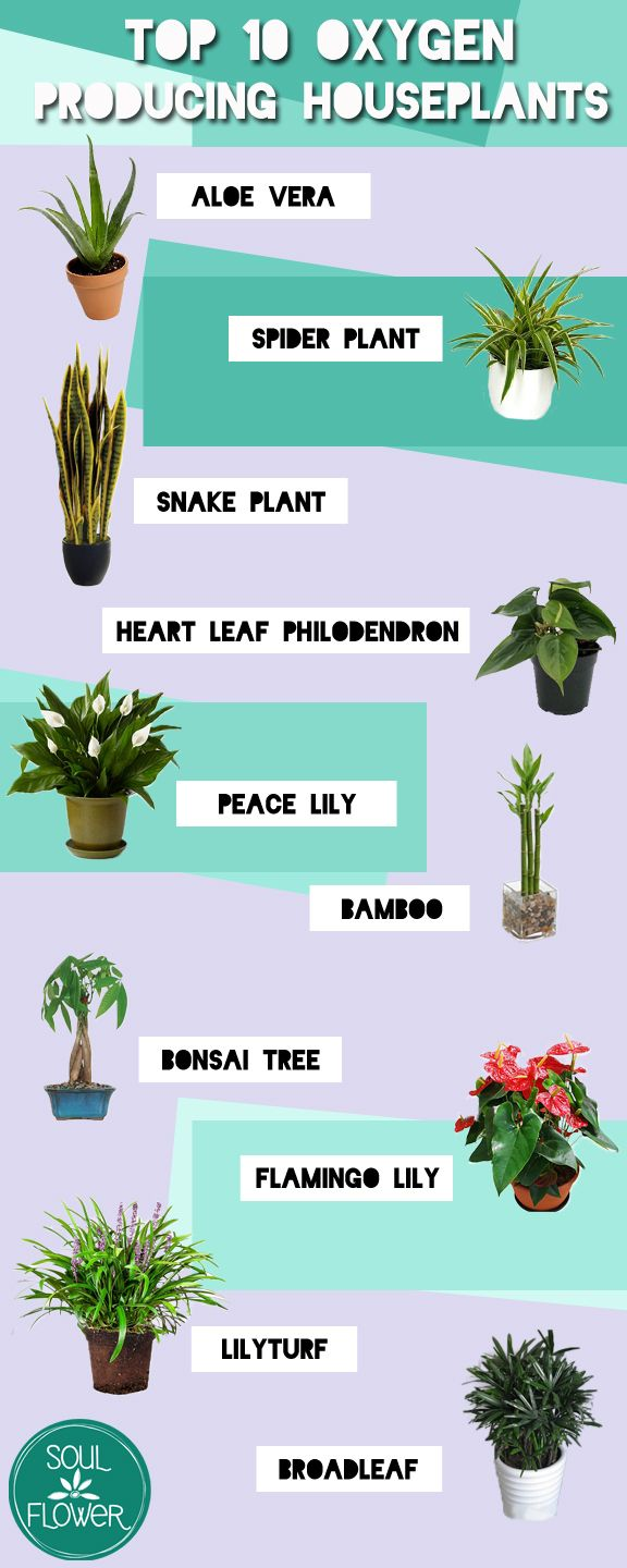 SoulFlower Top 10 Oxygen Producing Houseplants | Soul Flower Blog