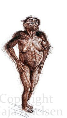 Lucy, our ancestor.  Australopithecus afarensis.  Study by Naja Abelsen. 2017. Sepia Ink/steel pen. papersize 50 x 70 cm.