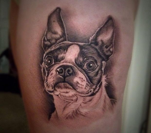 the 10 coolest boston terrier tattoo designs in the world body mod awsome pinterest boston. Black Bedroom Furniture Sets. Home Design Ideas