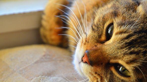 """【荻窪圭の""""這いつくばって猫に近づけ"""" ― 第174回 買ったばかりのニコン「D7000」で猫を試し撮り!】"""