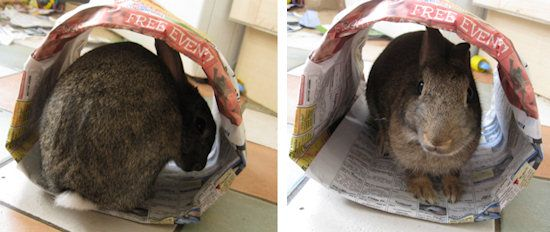 Newspaper bunny tunnels that are ok for bunny to chew