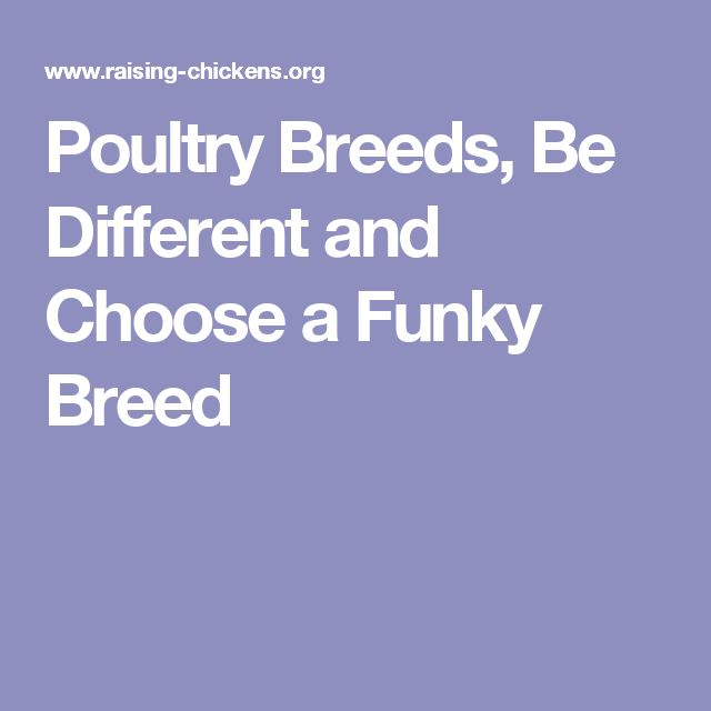 Poultry Breeds,  Be Different and Choose a Funky Breed