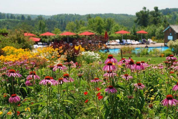 Ste. Anne's Spa. Gardens, Purple Coneflower, Day spa recommendation