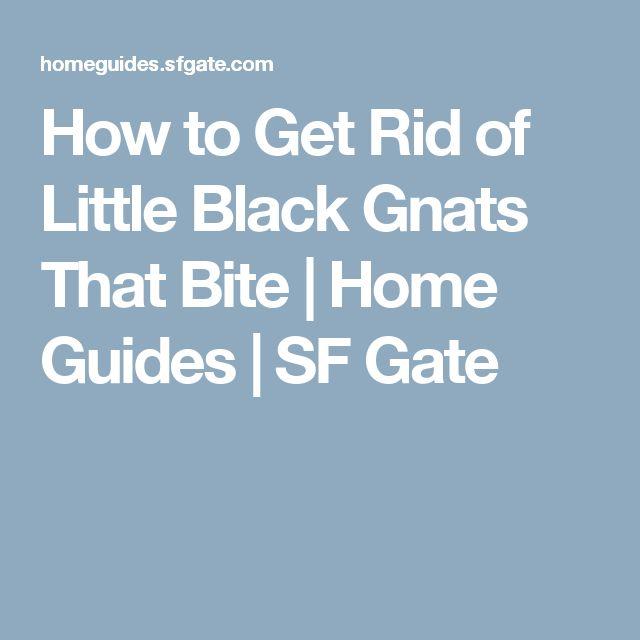25 Best Ideas About Gnat Bites On Pinterest Gnat