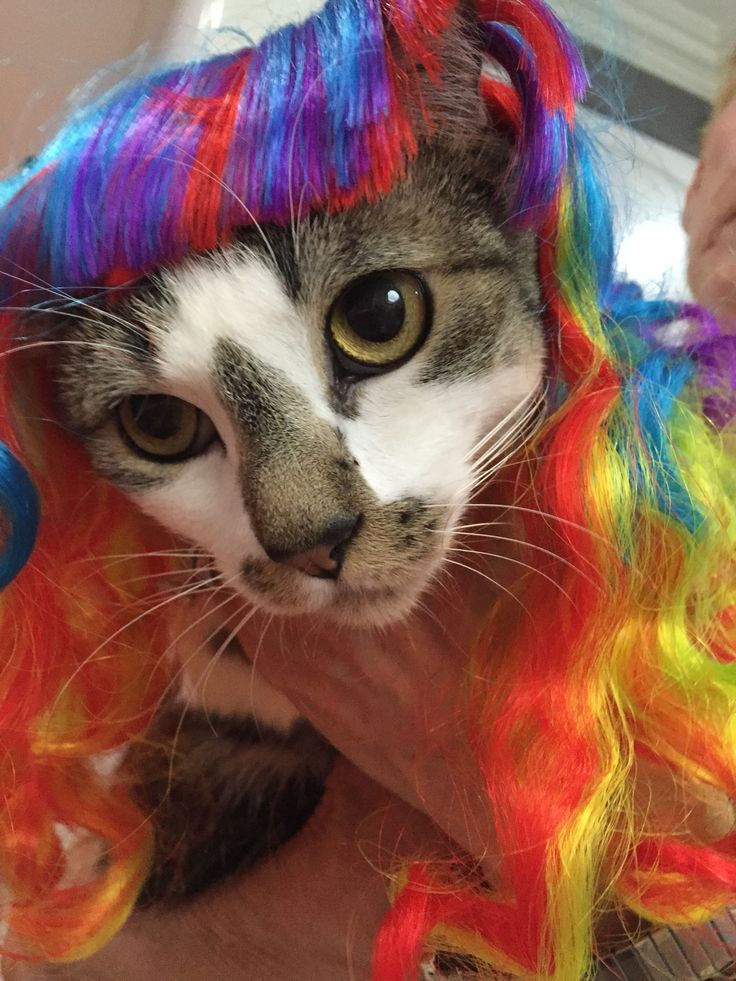 Chloe and the rainbow wig! (wig is available from Cushzilla.com)