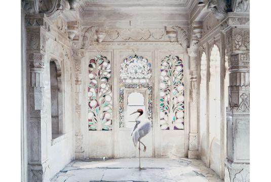 Tasveer Gallery - Karen Knorr | Karen Knorr Photographer | Karen Knorr…