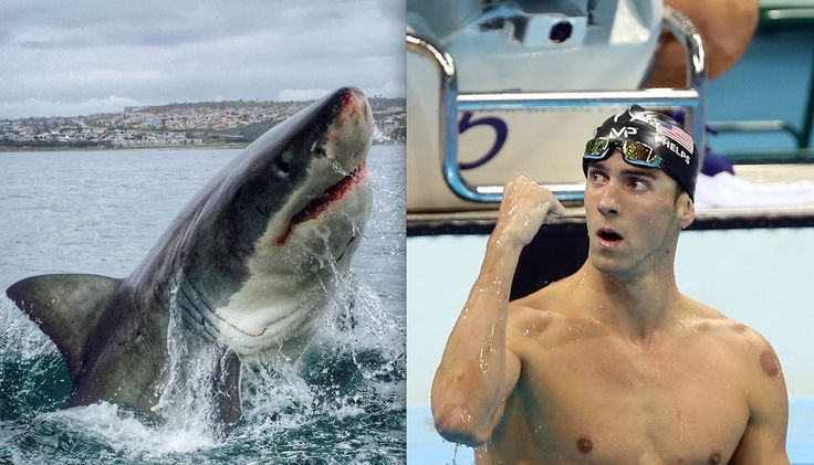 """Michael Phelps loses race to simulated great white shark https://tmbw.news/michael-phelps-loses-race-to-simulated-great-white-shark  Michael Phelps has finally met his match in the water: a great white shark.The Olympic champion swimmer was bested Sunday night in the Discovery Channel's Shark Week special """"Phelps vs. Shark: Great Gold vs. Great White.""""READ MORE: Olympic swimming champion Michael Phelps will race a great white for Shark WeekBut Phelps didn't swim with a real shark. He…"""