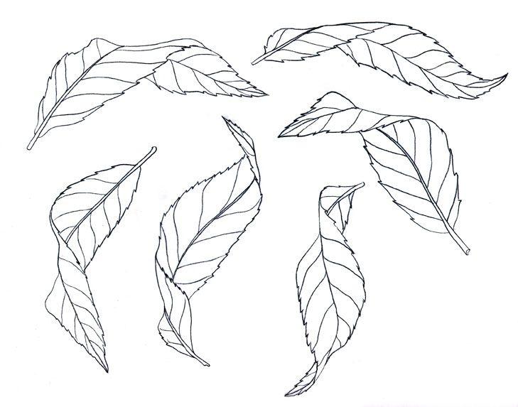Day 21 of Botanical Artist Mindy Lighthipe's 30 day Botanical Leaf ...