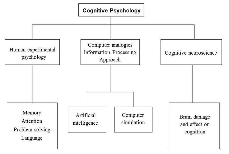 a study on cognitive psychology Behavioral and cognitive psychology uses the principles of human learning and development and theories of cognitive processing to understand how the brain works, rests and recovers behavioral and cognitive psychology is a recognized speciality in professional psychology.