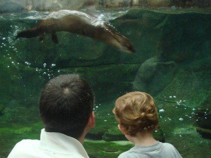 10 Things to Do in Charleston, SC with Kids - Charleston family vacation guide | Mommy Poppins Family Travel