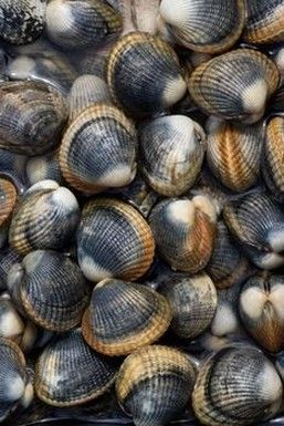 (Freshwater Mussels) Freshwater clams help keeping the aquarium clean and fresh. They do this by getting rid of the uneaten food and other unwanted materials from the water columns.