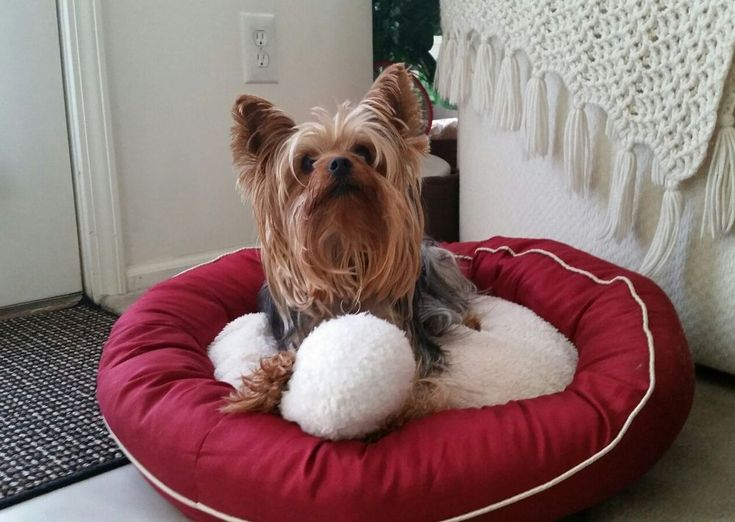 """24"""" Round Dog Bed - Cat Bed - Red Dog Bed - Pet Supplies #PetSupplies #PetSupplies #JoSam1129"""