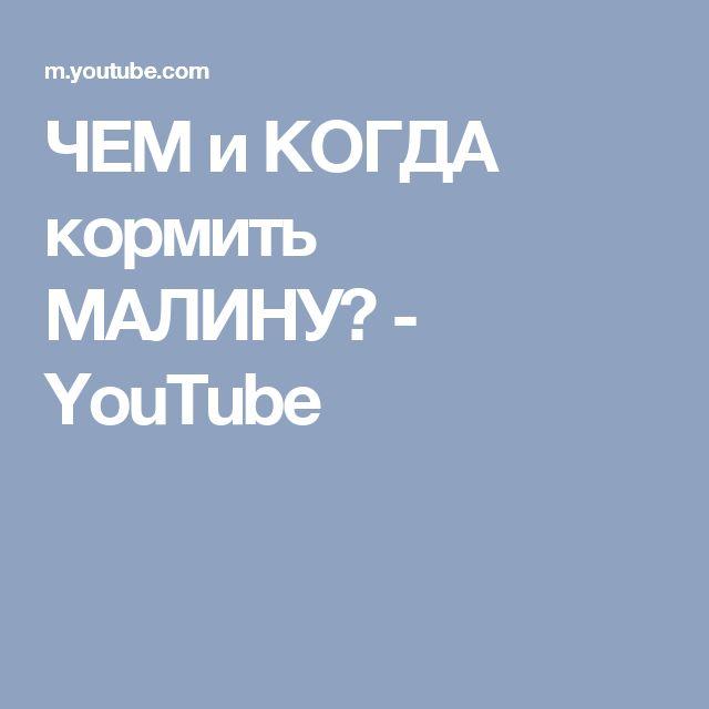ЧЕМ и КОГДА кормить МАЛИНУ? - YouTube