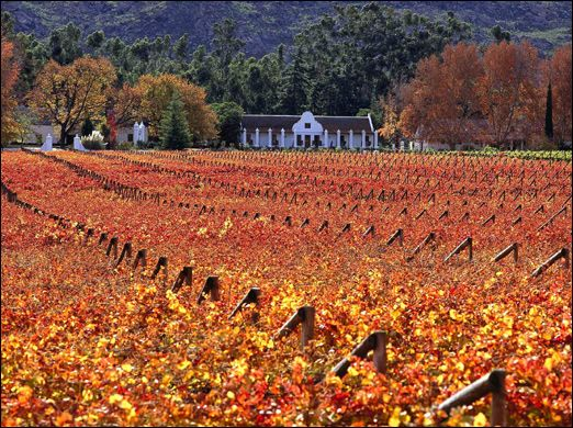Autumn in the Paarl winelands