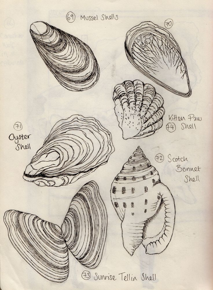 Contour Line Drawing Of Natural Forms : Best contour and cross line drawing images on