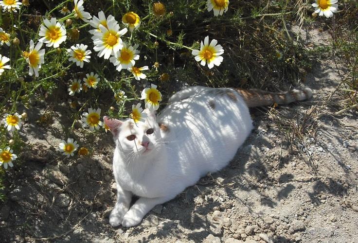 Gizzy enjoying some flower power