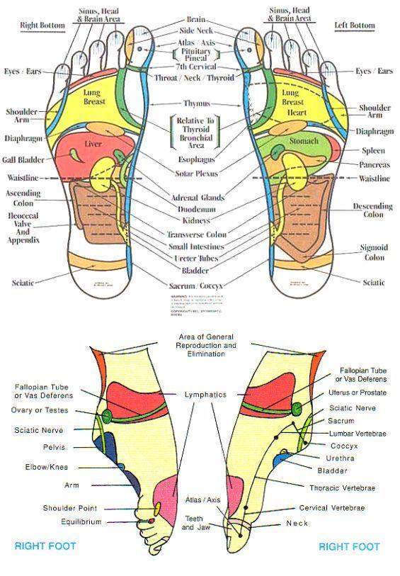 reflexology chart