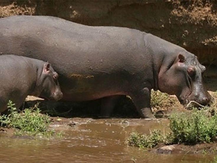 wildlife sanctuaries in india pdf