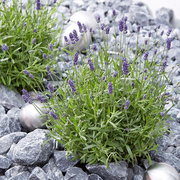 Die besten 25+ Kiesbeet Ideen auf Pinterest Landschaftsbau - kleiner steingarten bilder