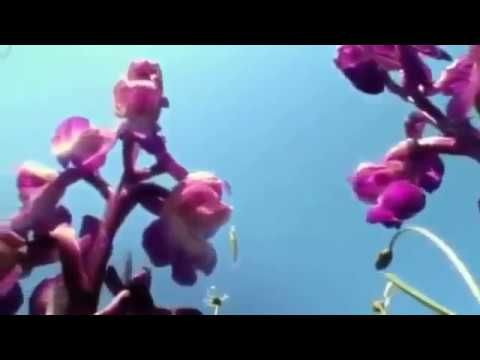 Plants behaving badly - a very informative docu about orchids with David Attenborough. Recommended to watch. Amazing things I never knew about orchids.