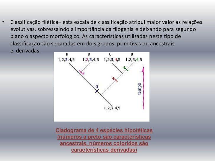 • Classificação filética– esta escala de classificação atribui maior valor ás relações   evolutivas, sobressaindo a import...