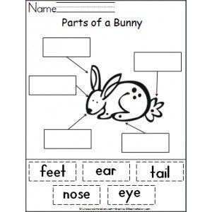 Parts of a Bunny Activity