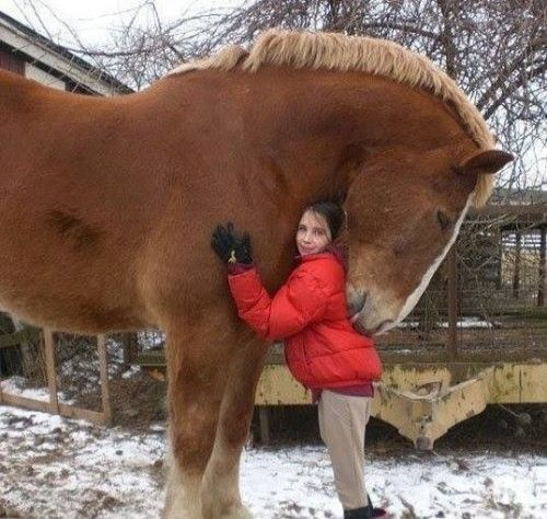 Huge horse hugging little girl in the show. He is so pretty and fuzzy and he is licking her! So cute!