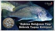 Eşkina Balığının Taşı Böbrek Taşını Eritiyor!