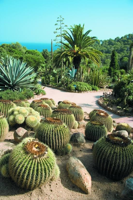 Cactus Al Jardi Botanic Pinya De La Rosa Entre Blanes I Lloret