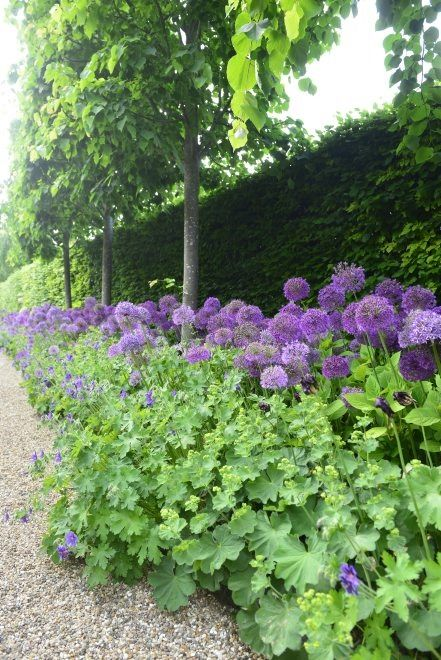 alium and lady's mantle